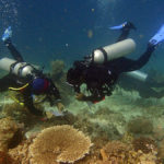 Reef Check EcoDiver Komodo