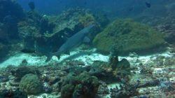 Castle Rock dive spot