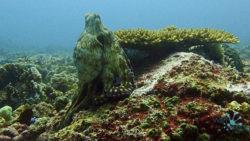 The Cauldron dive spot
