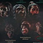 Island Flores, Homo floresiensis