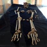 Остров Флорес, Homo floresiensis