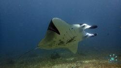 Makasar Reef dive spot