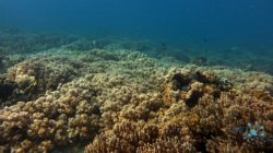 Tatawa Besar dive spot